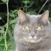 Recette facile pour chats gourmands!